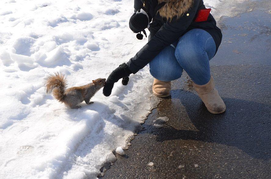Central Park Eichhörnchen füttern