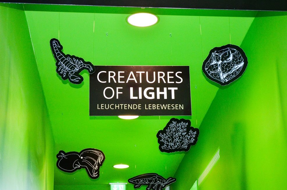 Creatures of Light im Science Center Heilbronn