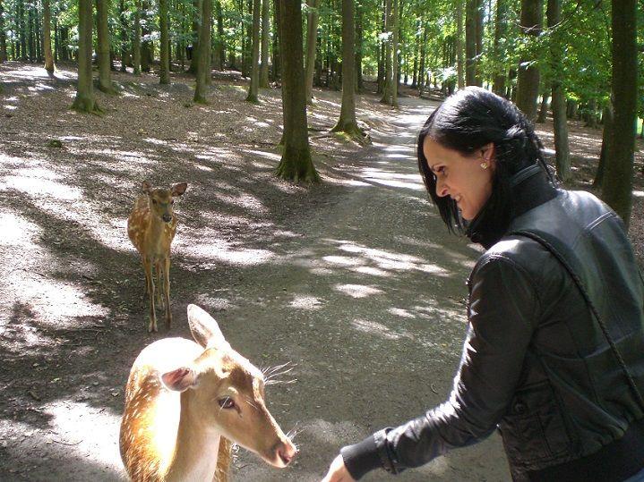 tiere füttern wildpark tripsdrill