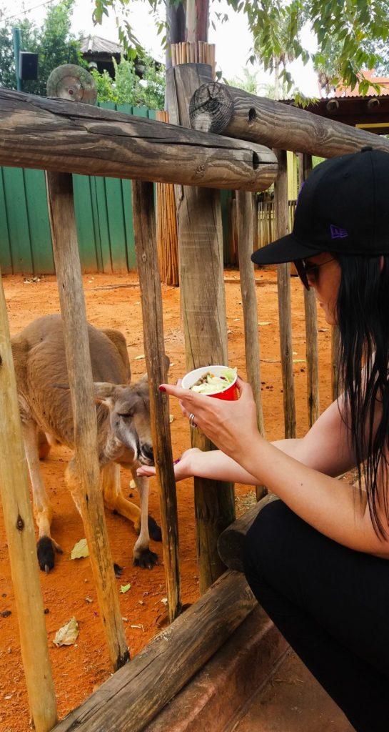 Busch Gardens Erfahrungen