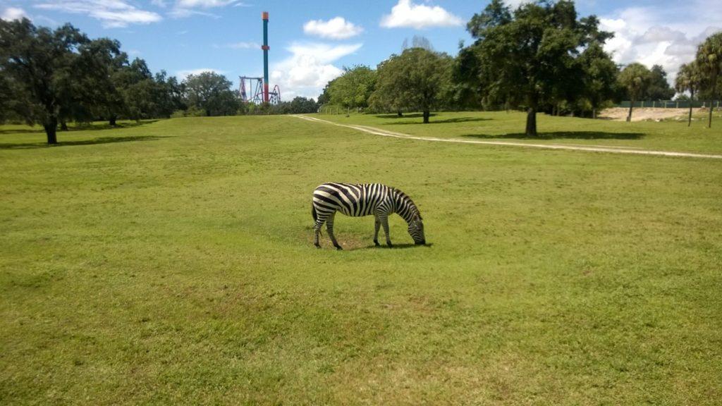 Erfarhungen Bush Gardens Florida Tampe