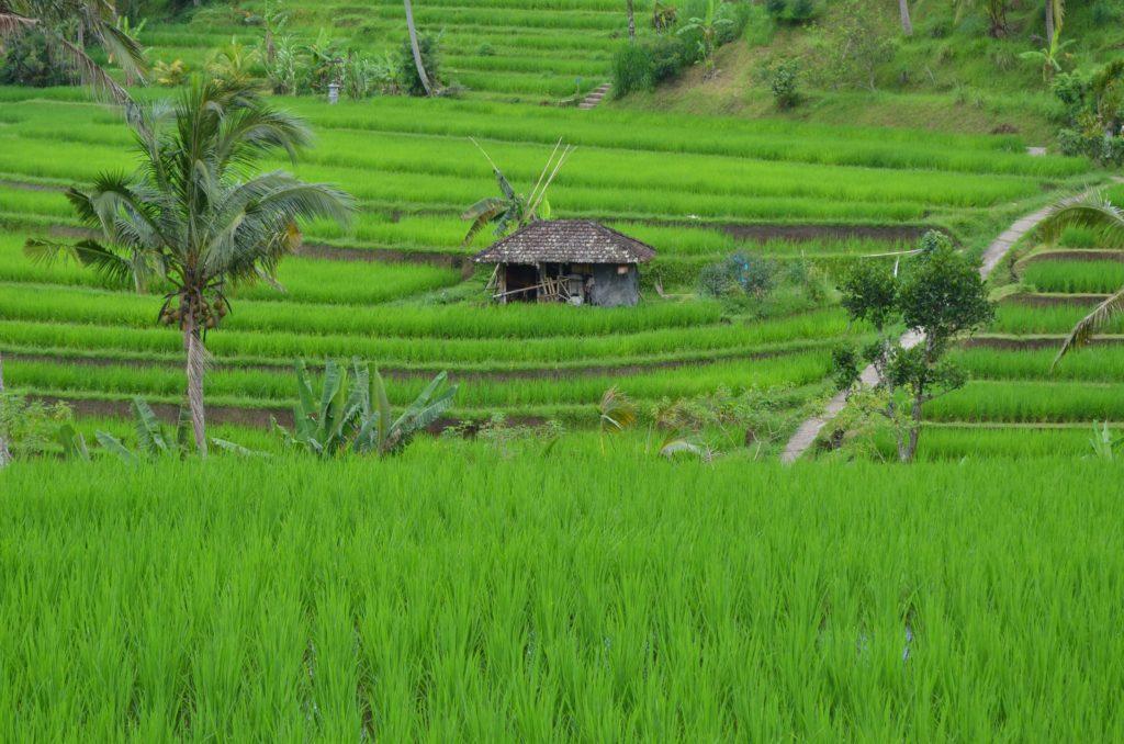 Reistereassen Bali