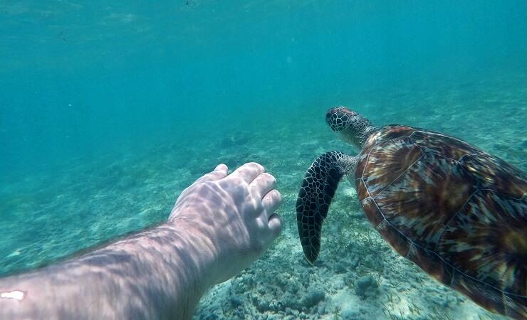 schildkröten-gili-trawangan