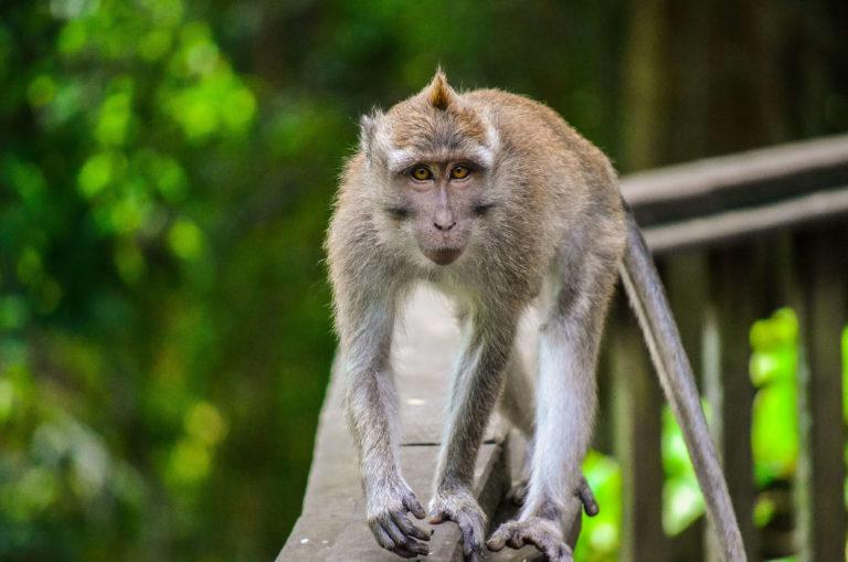 Affenwald Ubud Bali