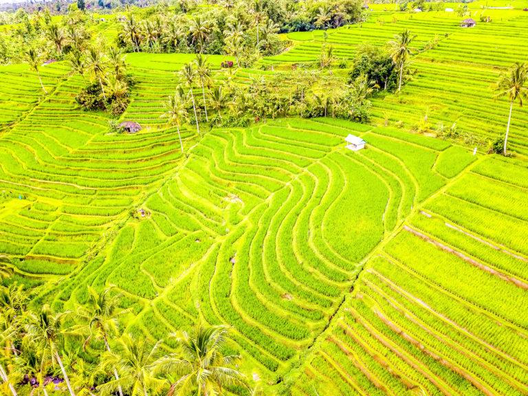 Bild Drohne Jatiluwih Reisterrassen