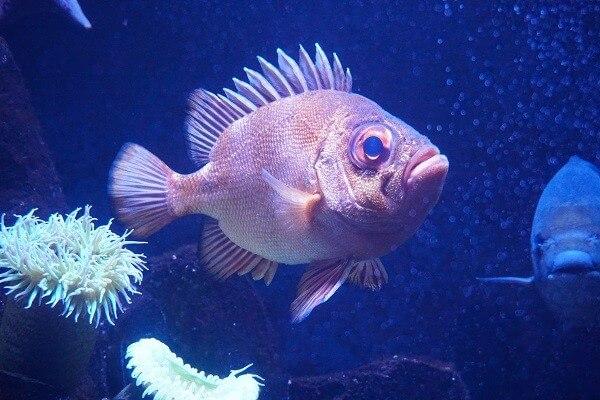 Aquarium Zoo Leipzig - Leipziger Sehenswürdigkeiten