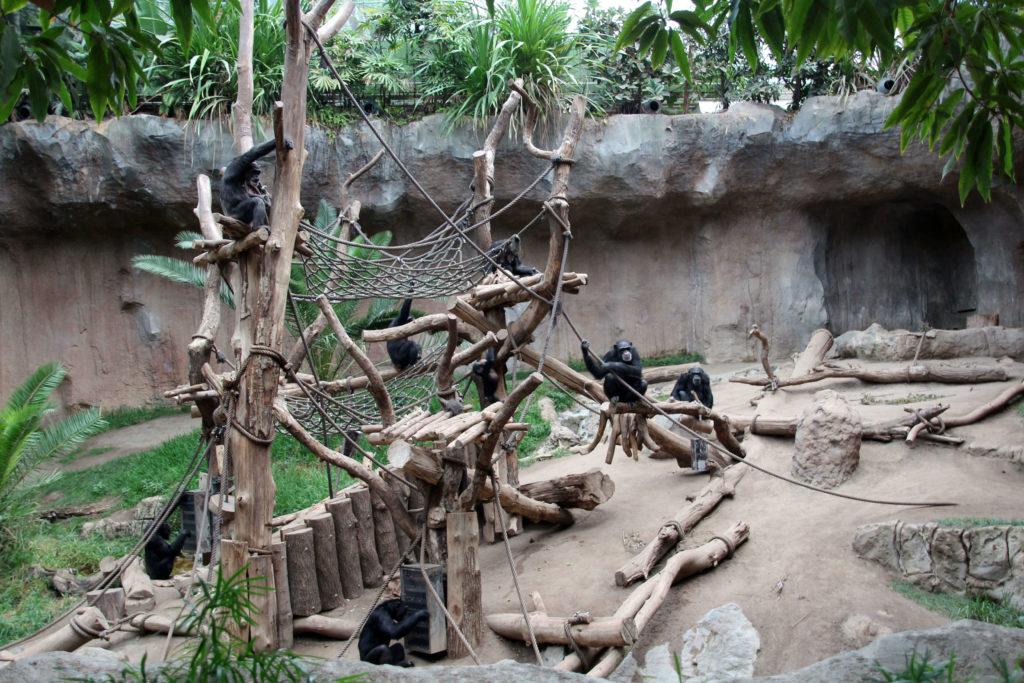 Schimpansen Pongoland Zoo Leipzig