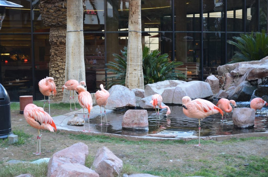 Gratis Zoo Las Vegas
